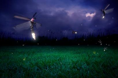 Fireflies at night
